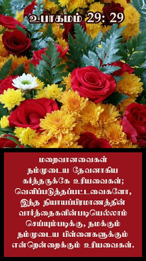 Pin By Jamila Rani On Tamil Bible Verse Wallpapers Beautiful Flowers Flower Phone Wallpaper Flowers Bouquet