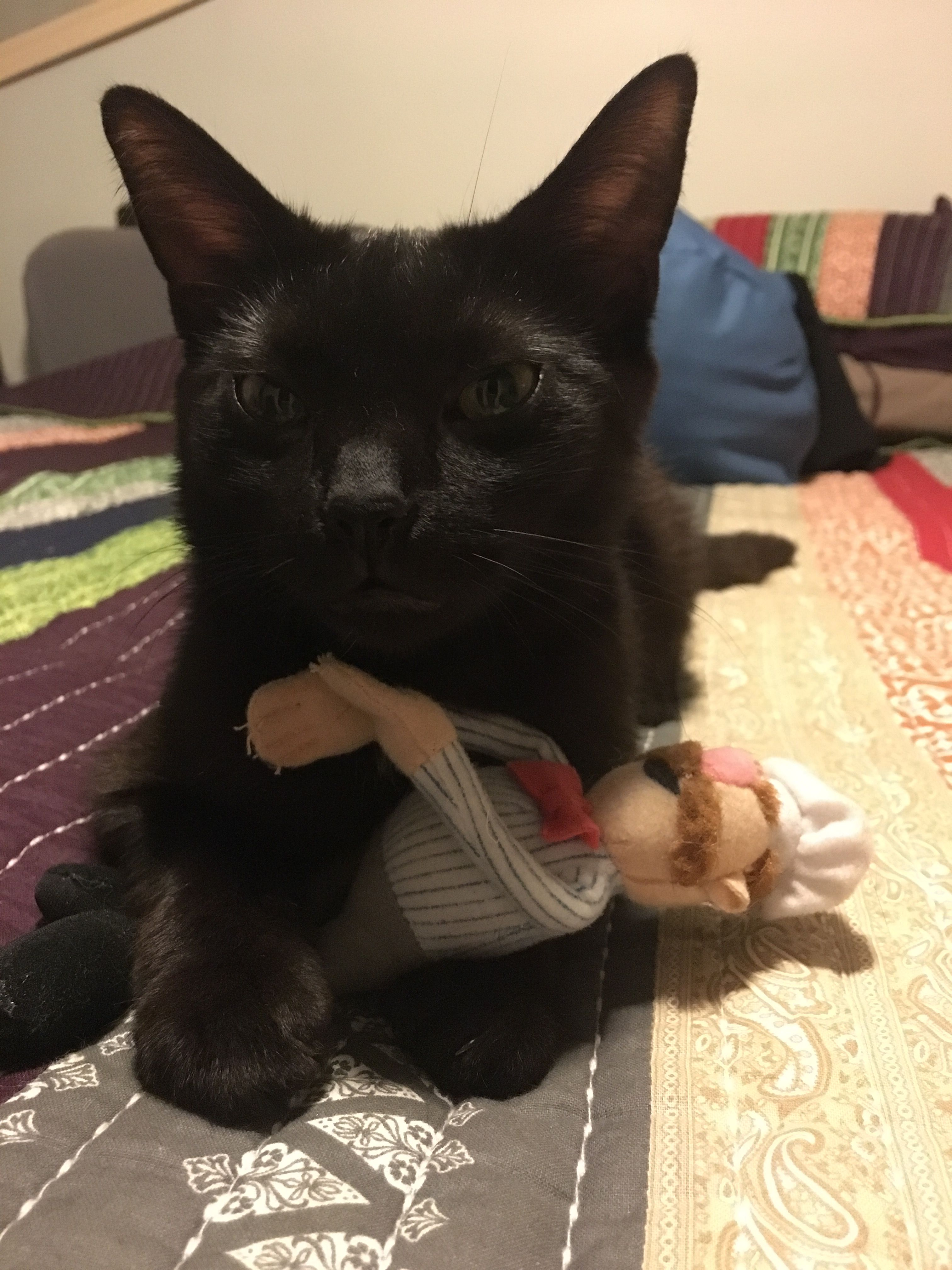 Ethel Loves The Swedish Chef Pets Movie Black Cat I Love Cats
