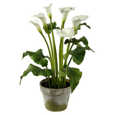 Winward Designs Calla Lilies Flowers in Clay Pot
