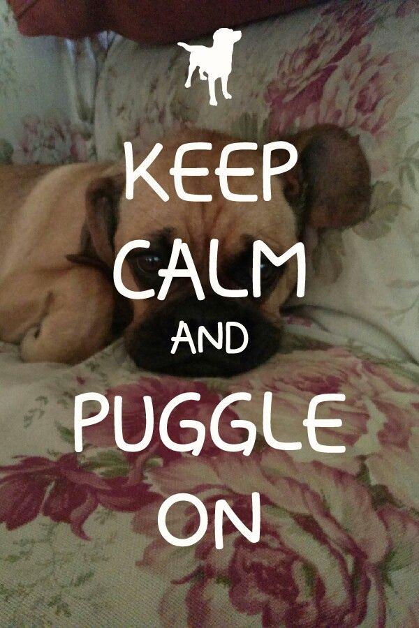 Keep calm and puggle on
