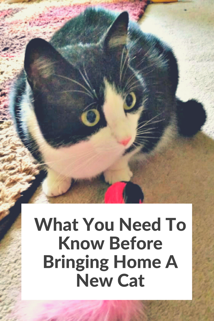 What You Need To Know Before Bringing Home A New Cat