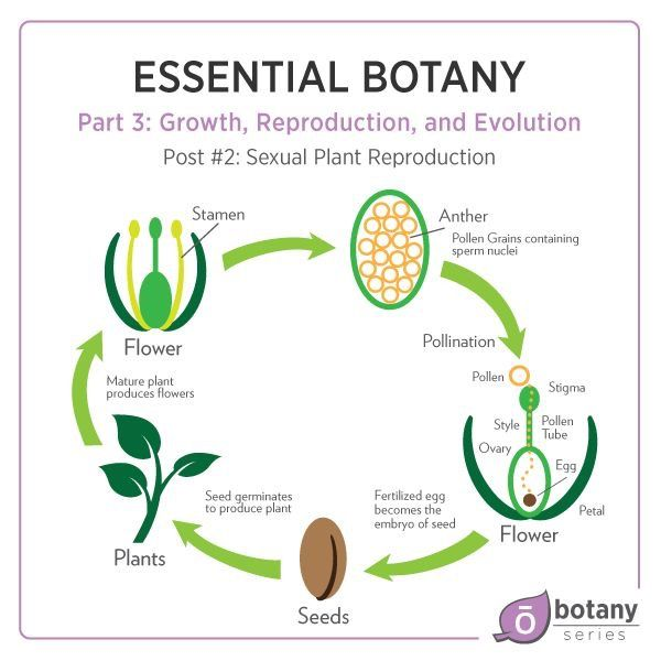 Pin On Doterra Dr David K Hill Dc Essential Botany Part 3
