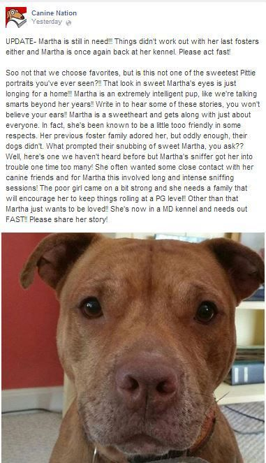 Urgent Martha Needs A Home Just Look At Her Beautiful Face Can
