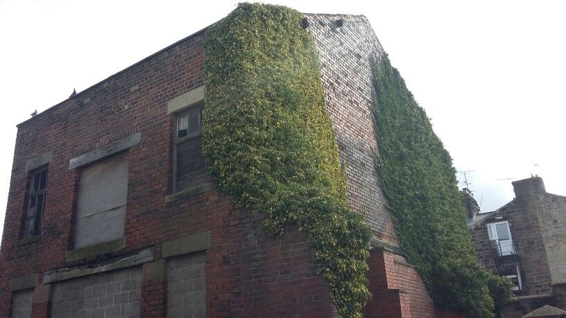 Abandoned building in Harrogate look at that ivy!