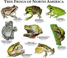 Tree Frogs of North America by rogerdhall