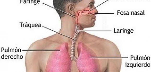 بحث عن الجهاز التنفسي Professions