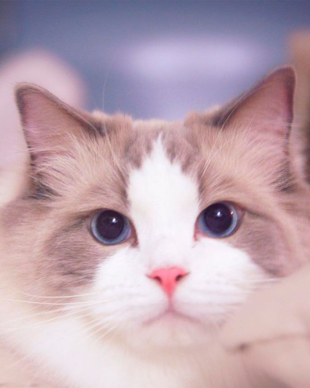 Lovely Cats Pictures In 2020 Cute Cat Gif Cat Pics Kitten Images