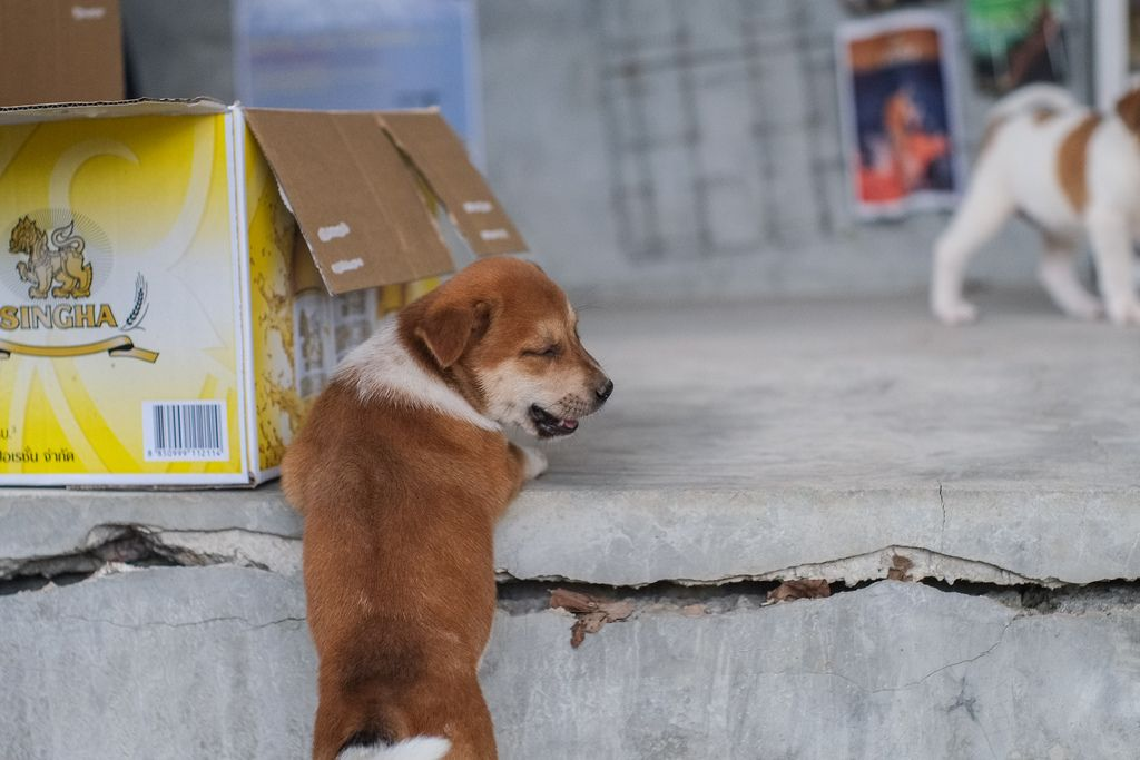 Puppy at Chiang Mai, Thailand. Taken with SMC Takumar 50/1.4.   by lala_turbo_nitro