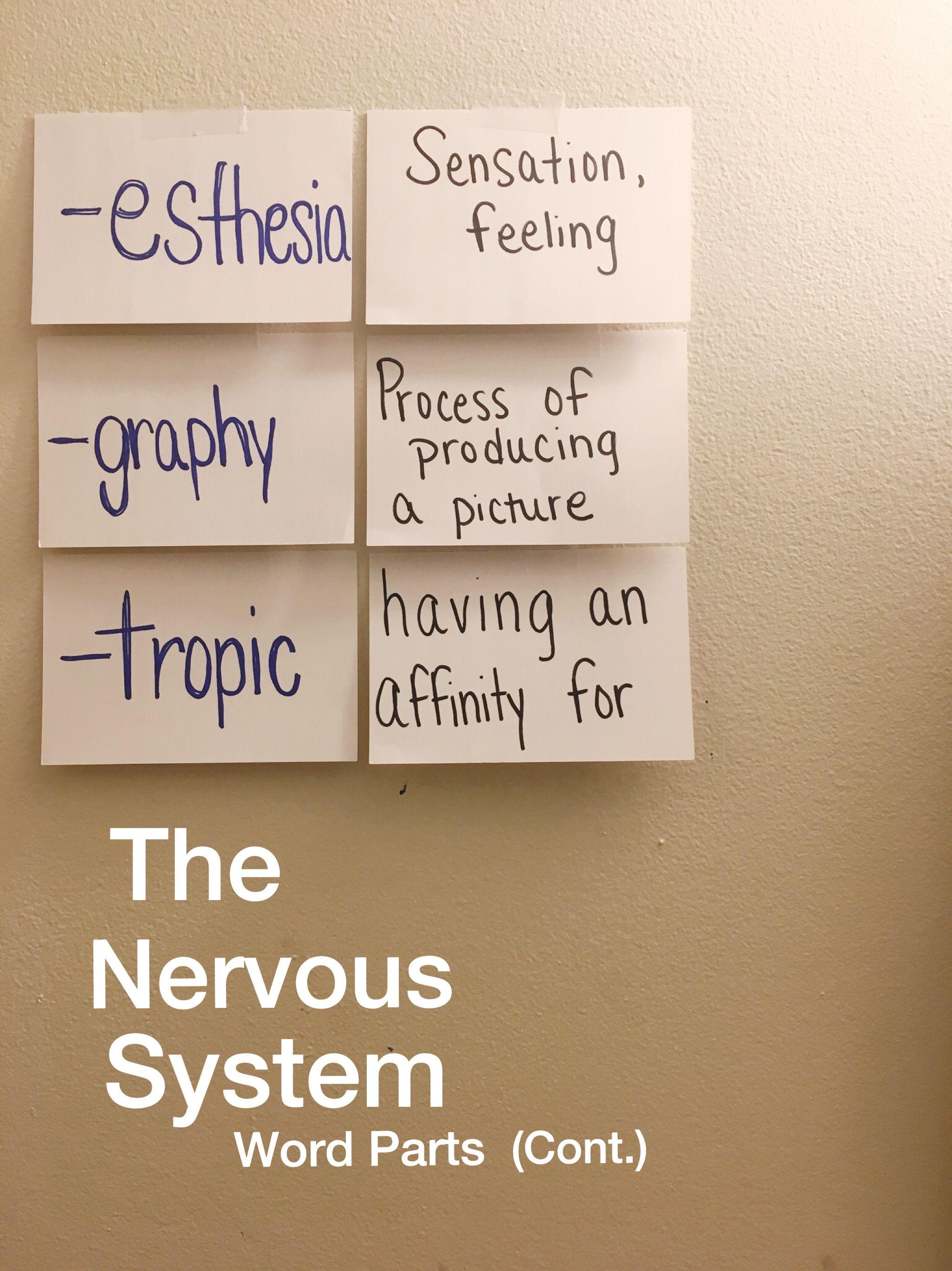 Nursing Notes. The Nervous System Word Parts, cont. | Nursing Notes ...