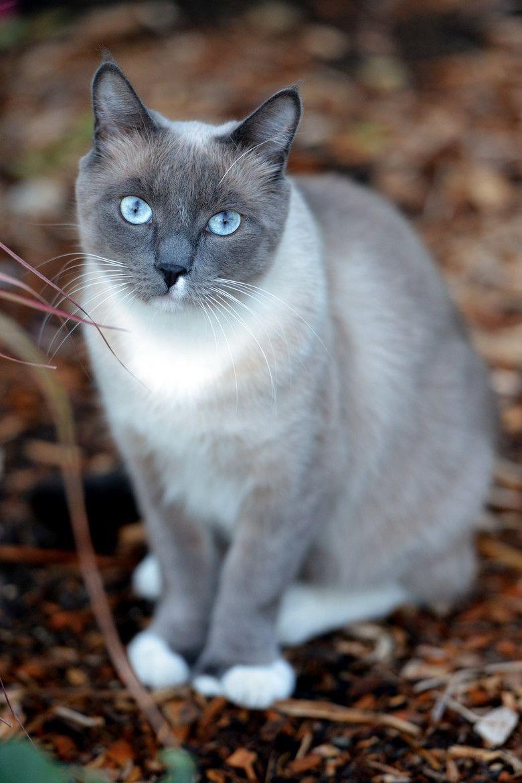 llbwwb Hello ) Polydactl by Josh Norem Pretty cats