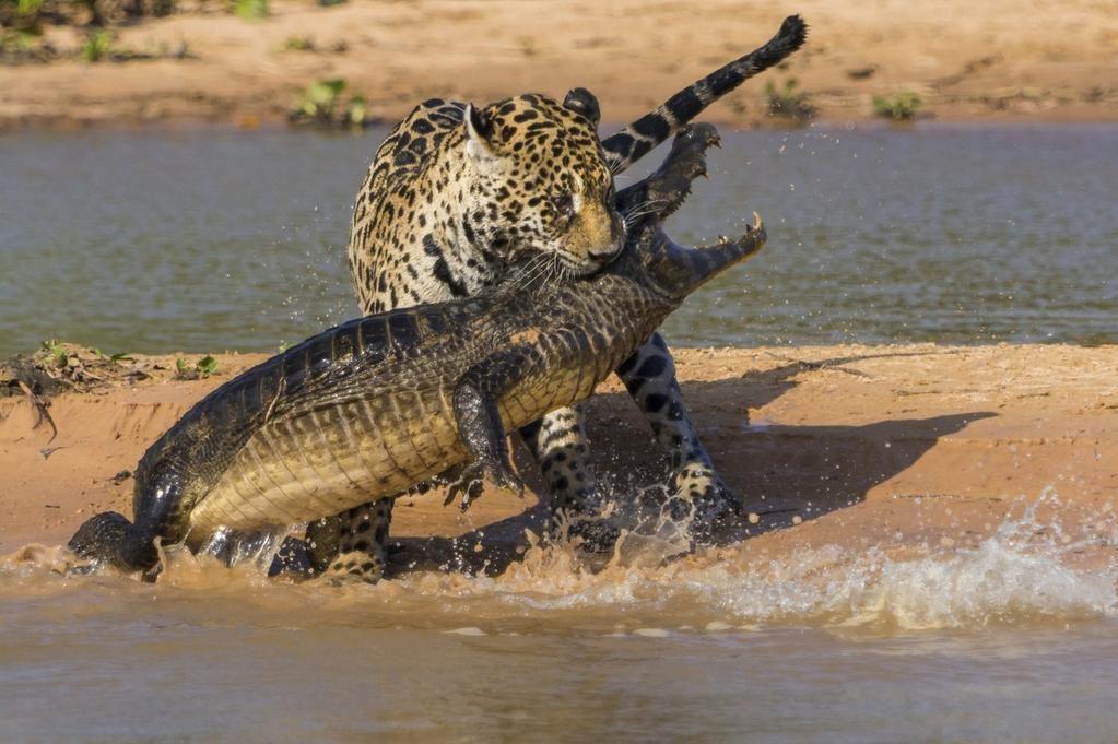 "@HuffPostGreen http://www.huffingtonpost.com/2014/06/29/wildlife-photographer-peoples-choice_n_5540286.html… """