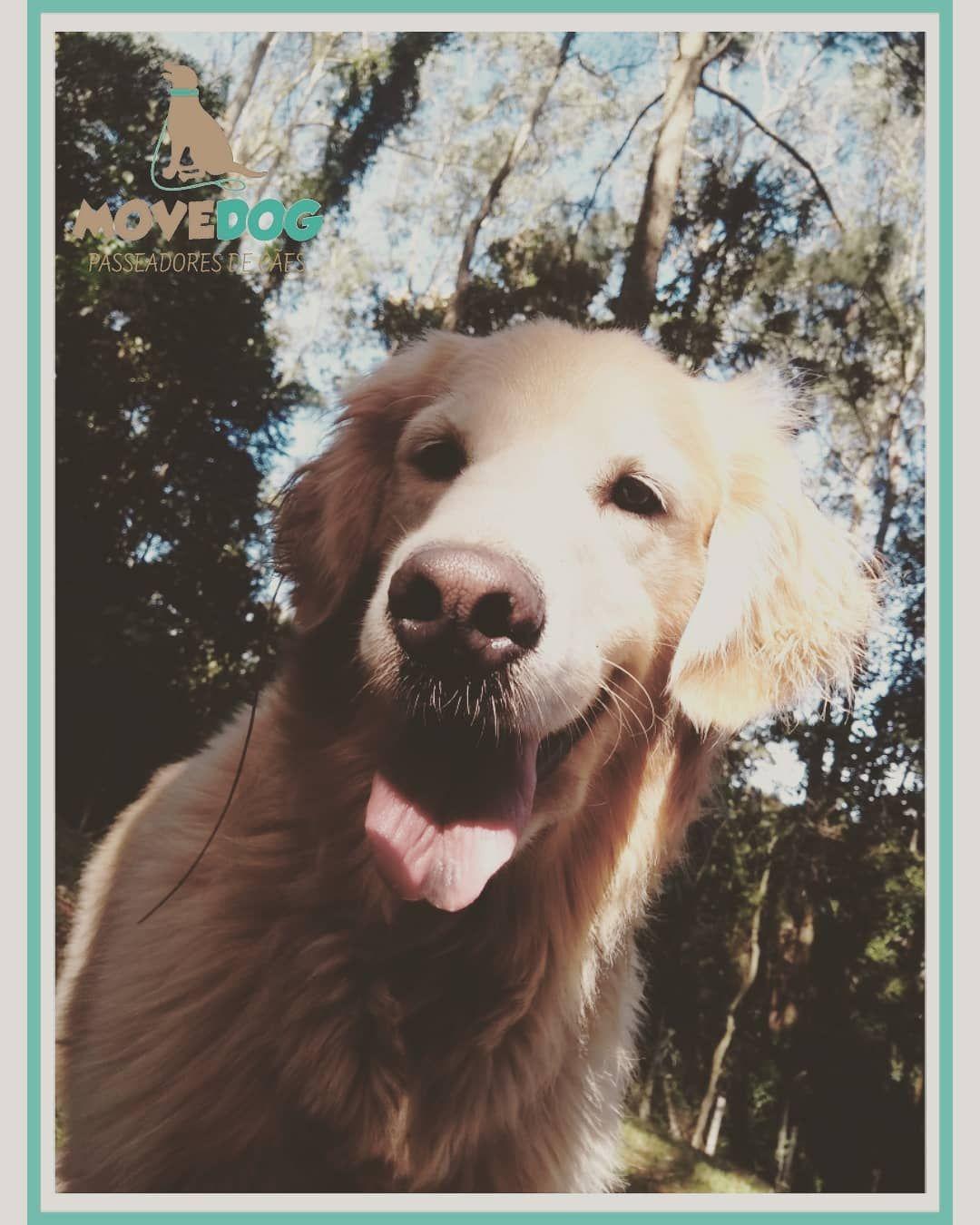 Benta Riqueza Seucaofelizemmovimento Movedog