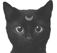 Graphic Design Cat Face Drawing Tumblr Png Cats Tumblr