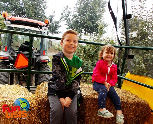 With plenty of attractions, there is a lot of fun for the whole family at Taves Family Farms. From young to old, everyone can enjoy the day out today!