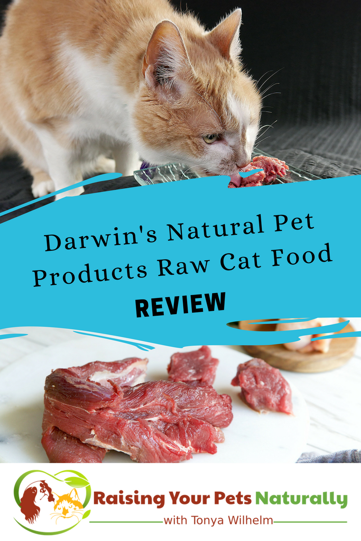 Best Raw Cat Food Brands for Indoor Cats