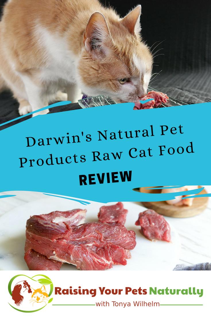 Best Raw Cat Food Brands for Indoor Cats