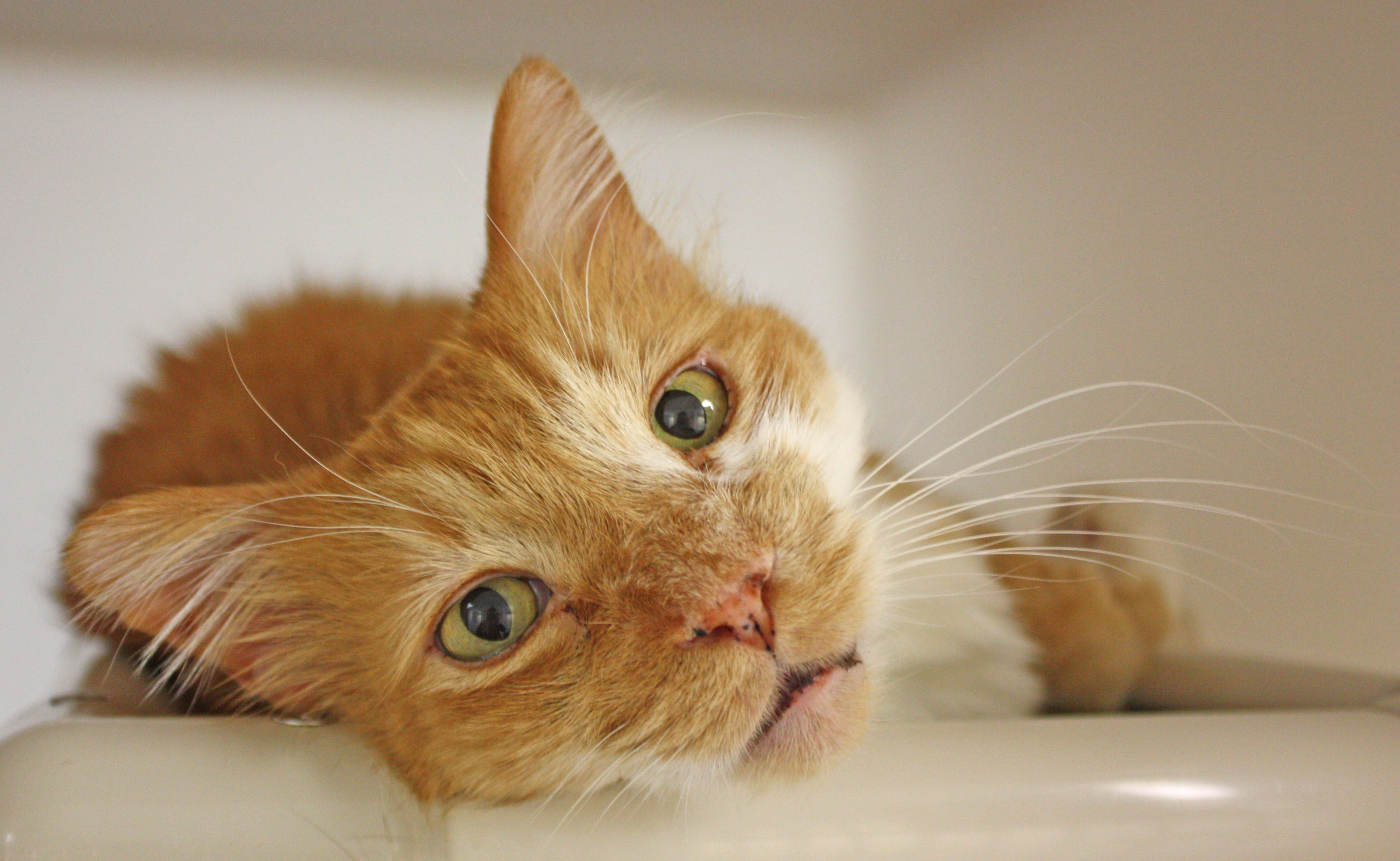 Sunny is a sweet senior kitty looking for a lowkey home