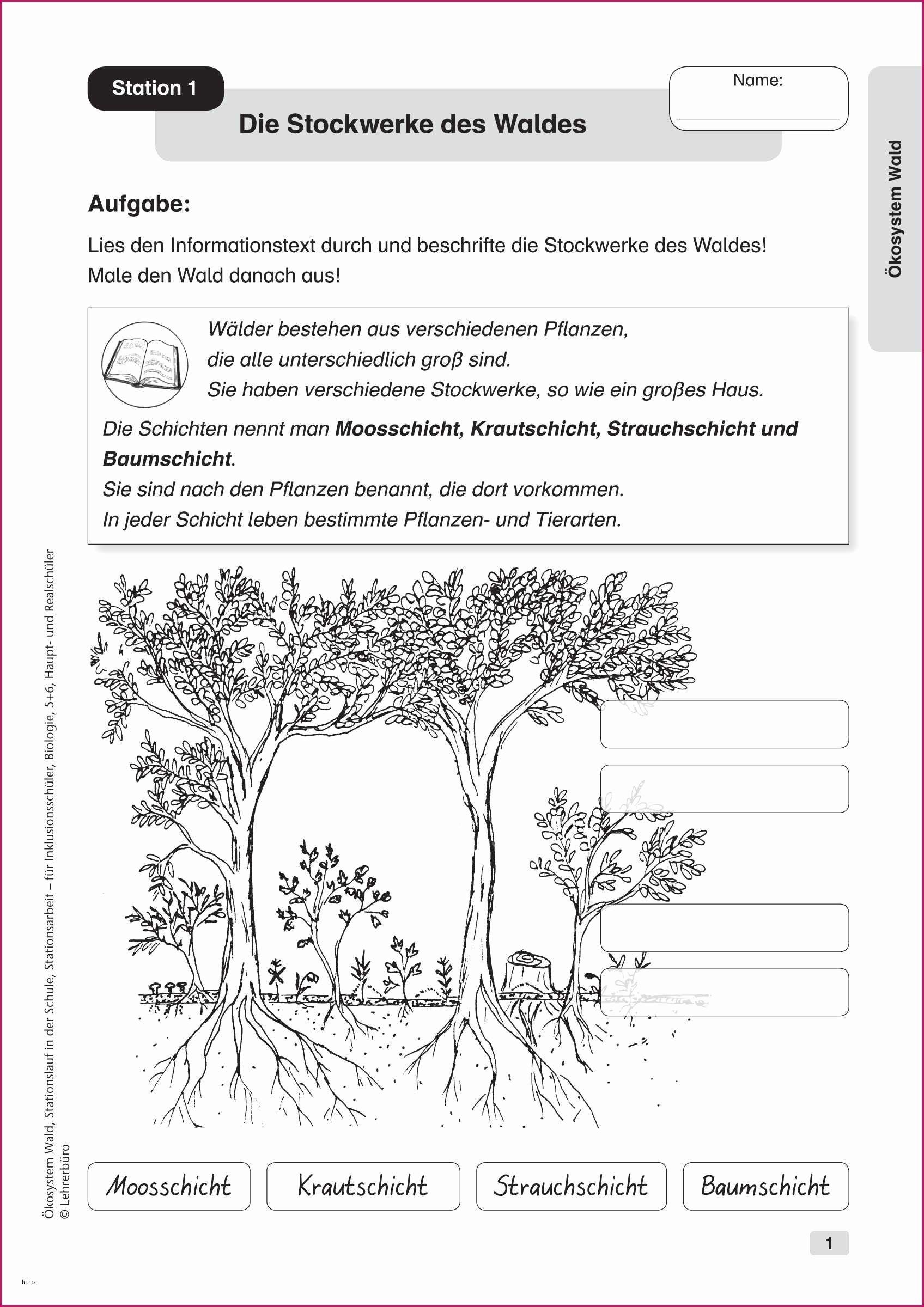 20 Schule Geographie Ideen   schule, wald grundschule, stockwerke ...