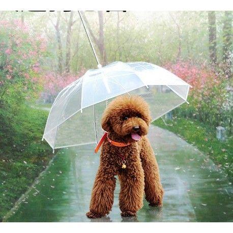 Parasol Dla Psa Na Deszcz Dog Gadgets Dog Umbrella Dog Decor