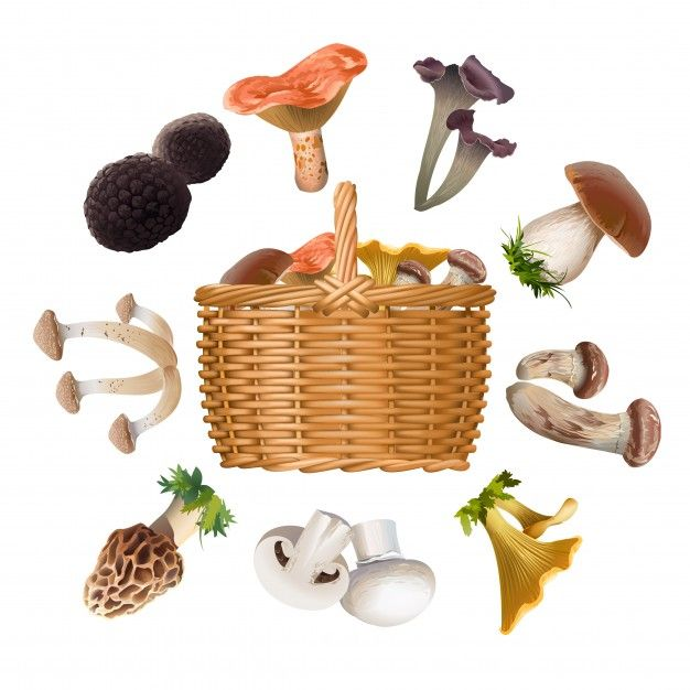 Collection of various species edible mushrooms and basket Free Vector