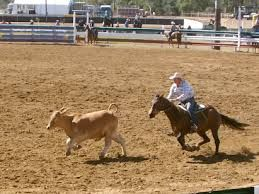 Image result for paradise lagoons campdraft