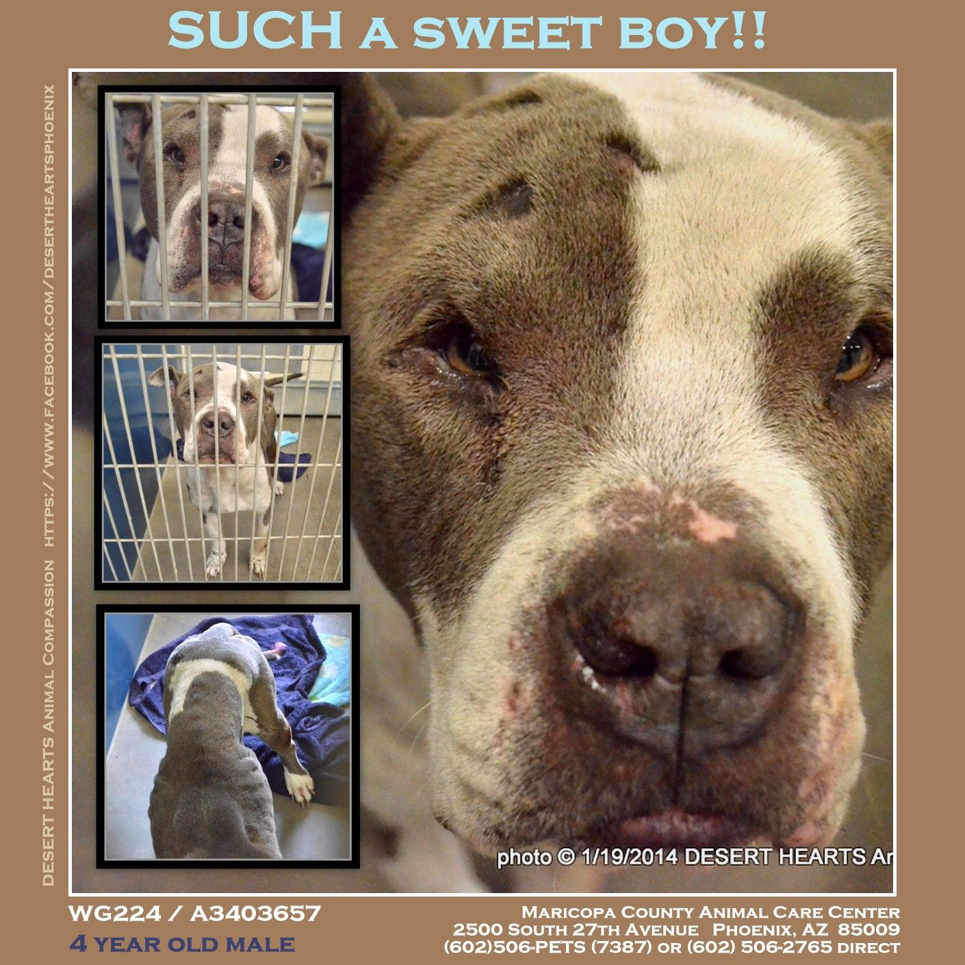 Featured dog in need. Status Stray hold. Needs rescue