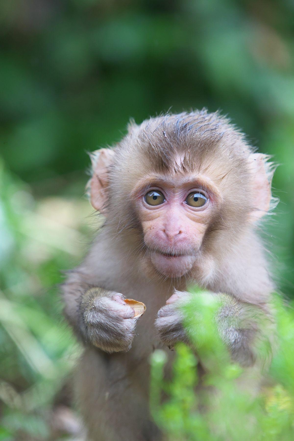 Sweet Baby Jigokudani Monkey Park in 2020