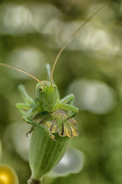'grass hopper' by Jo Beerens