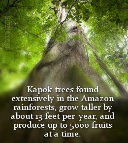 Amazon Rainforest Plants Rainforest Plants Amazon Rainforest