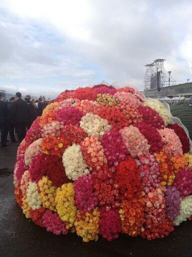 Rosas para el Papa Francisco en Quito