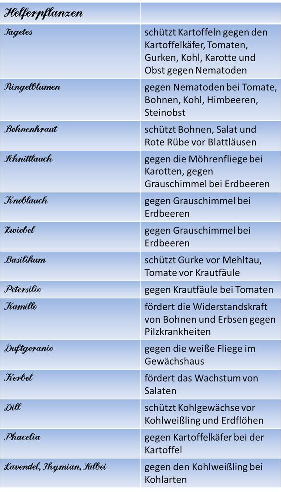 Berliner Landpomeranze Alles Rund Ums Hochbeet Iii Mischkultur Und