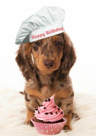 Birthday Longhaired Happy Birthday Dachshund Dog Birthday