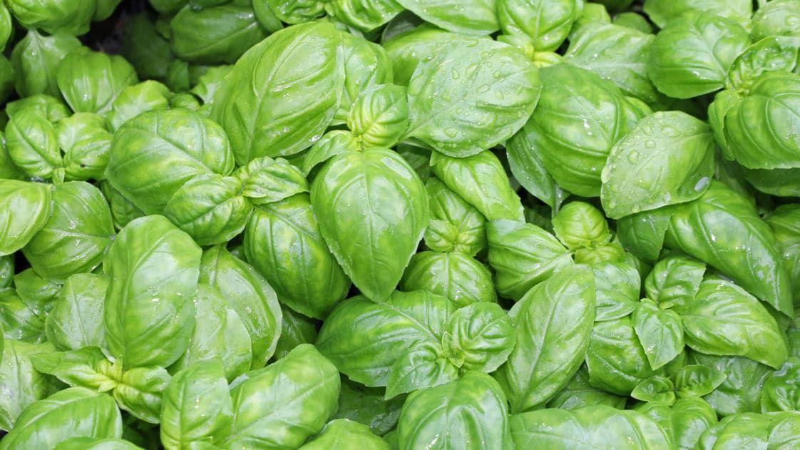 Jardiner facile Jardiner, semer et récolter en 2020
