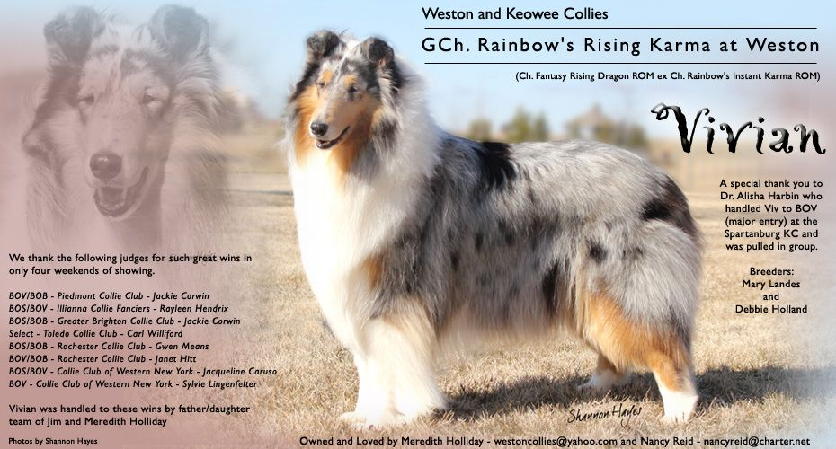 Gch Rainbow S Rising Karma At Weston Collie Beautiful Dogs Weston