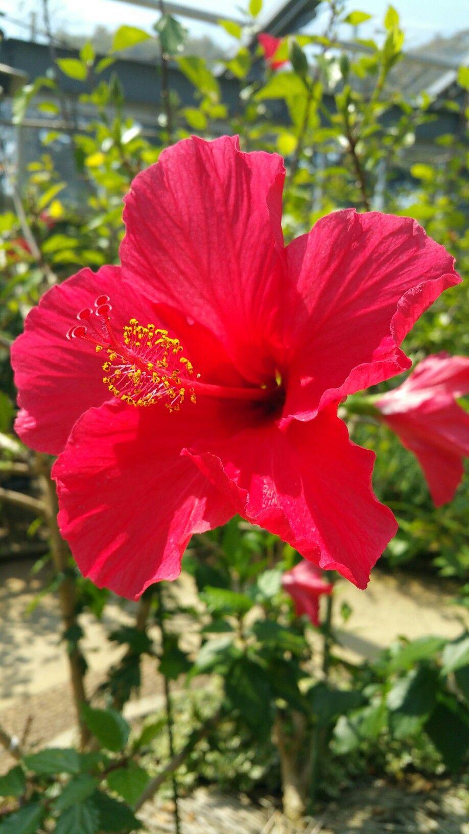 Pin de Victoriano DE en flores y plantas de hoja | Pinterest ...