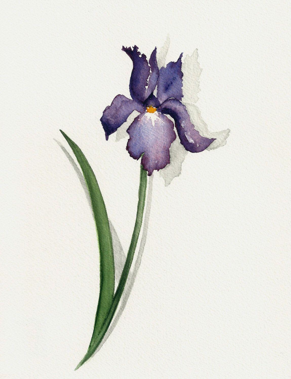 Iris painting original watercolor flower painting watercolour iris