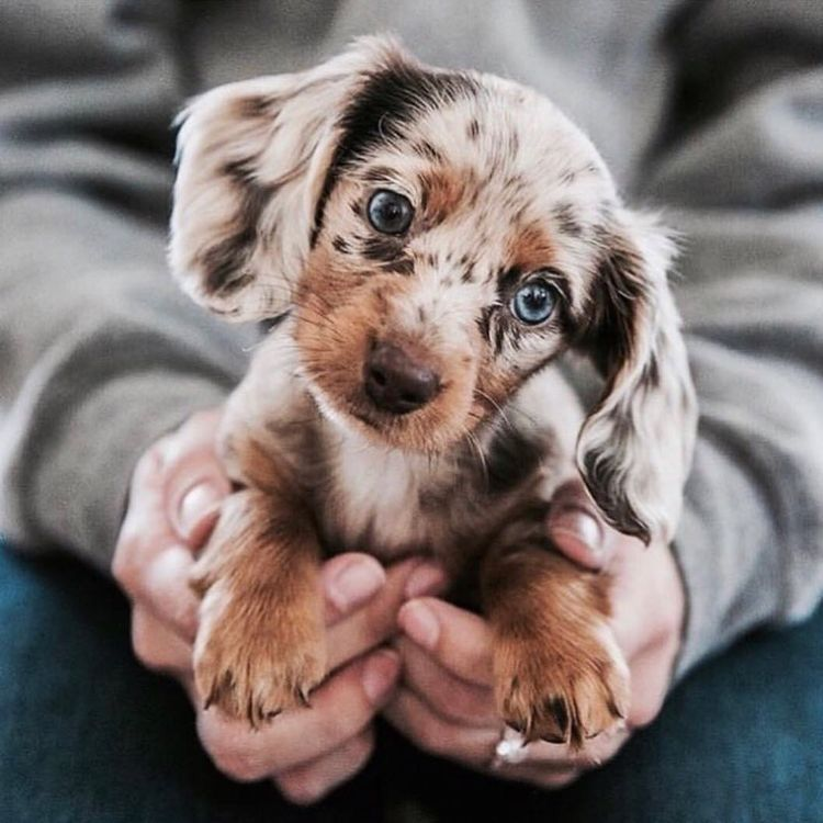 Pin By Megan Kabre On Furry Friends Cute Puppies Cute Animals Dogs