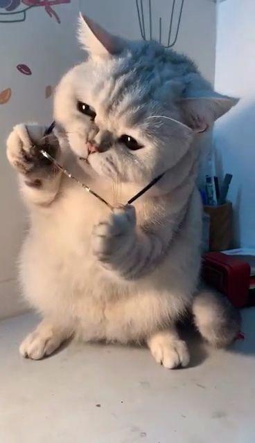#CatsSinging