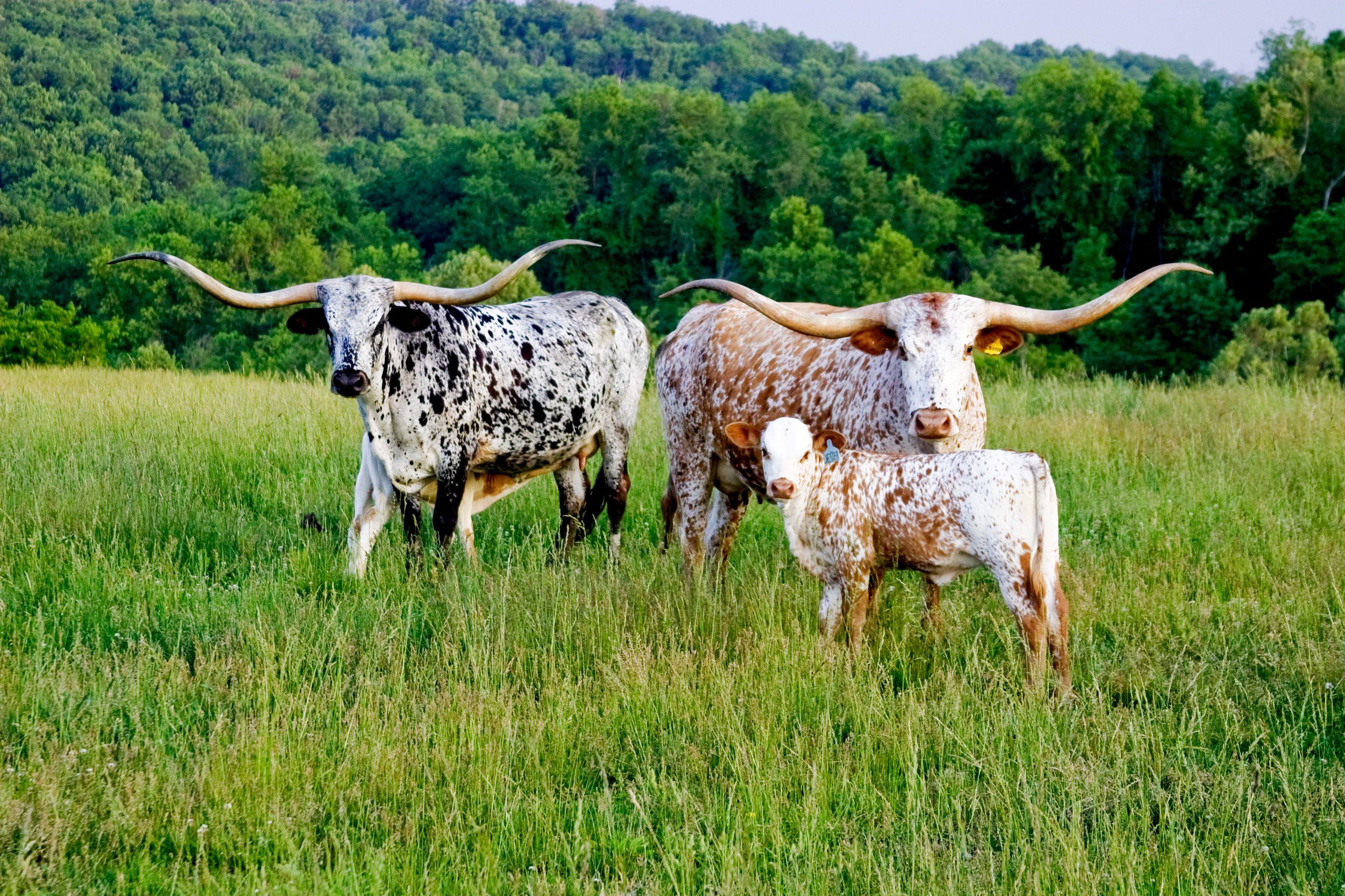 Elbertdouglas County Livestock Association