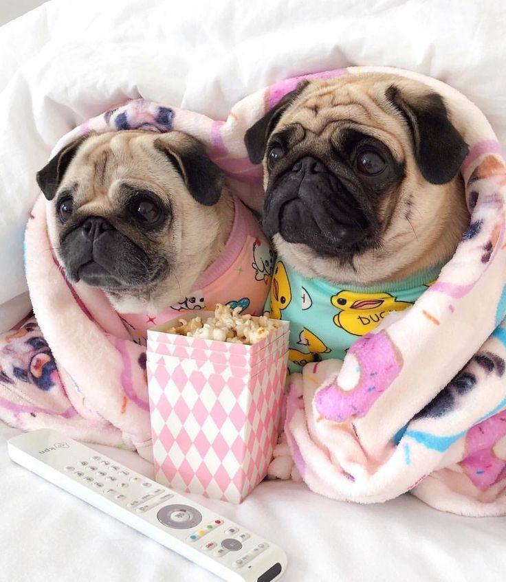 Is It Weekend Yet Minipet Online Pet Boutique Is A Melbourne