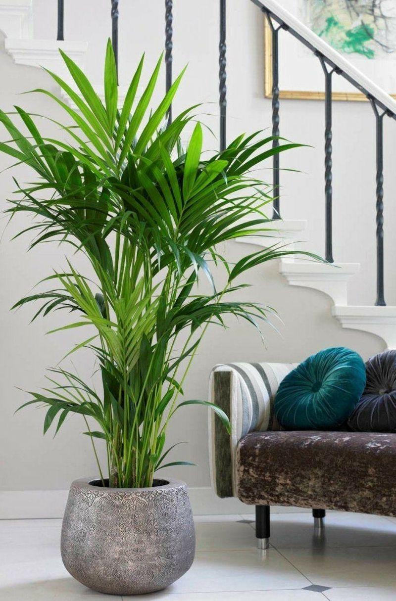 Pflanzen Fürs Wohnzimmer