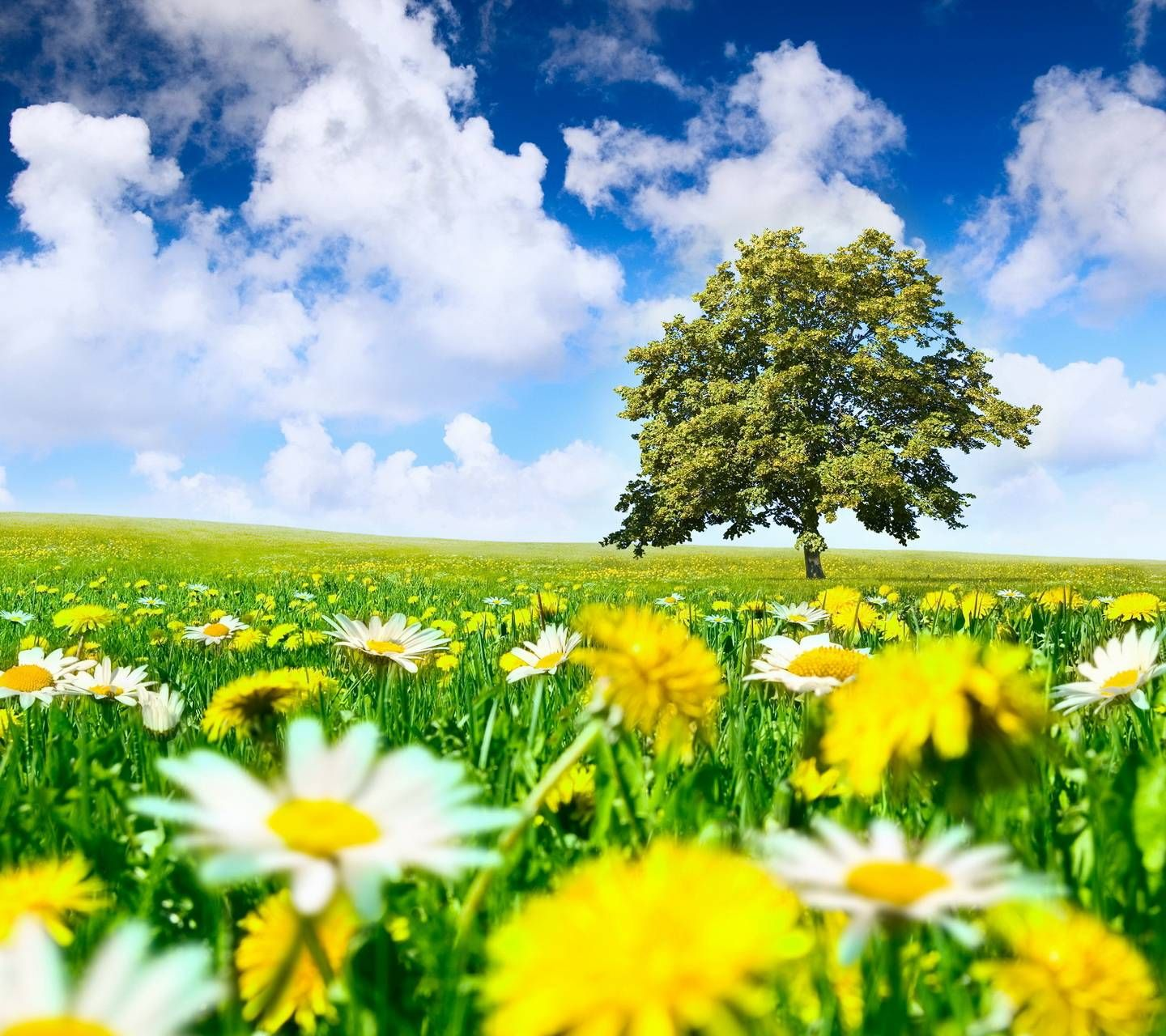 Spring Meadow Nature Wallpaper Spring Nature Nature