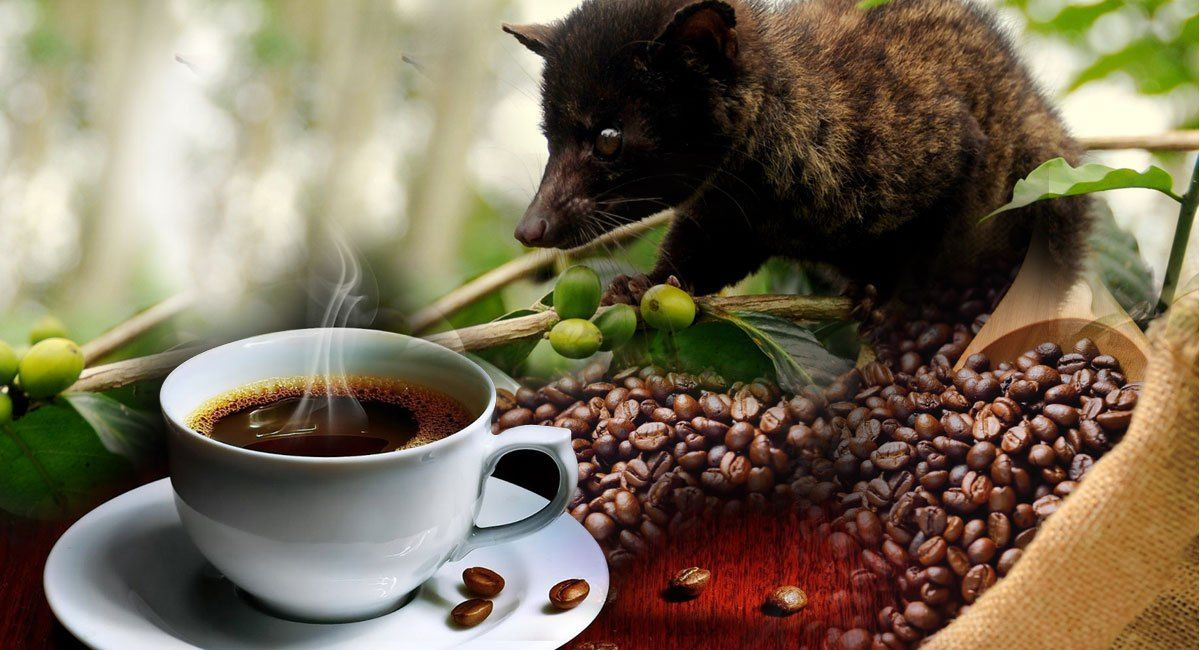 Bedugul Tanah Lot Tour Bali Expensive coffee, Civet