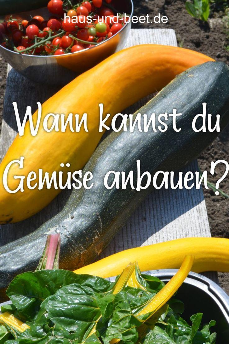 Wann kannst du Gemüse anbauen Wann kannst du Gemüse anbauen? /