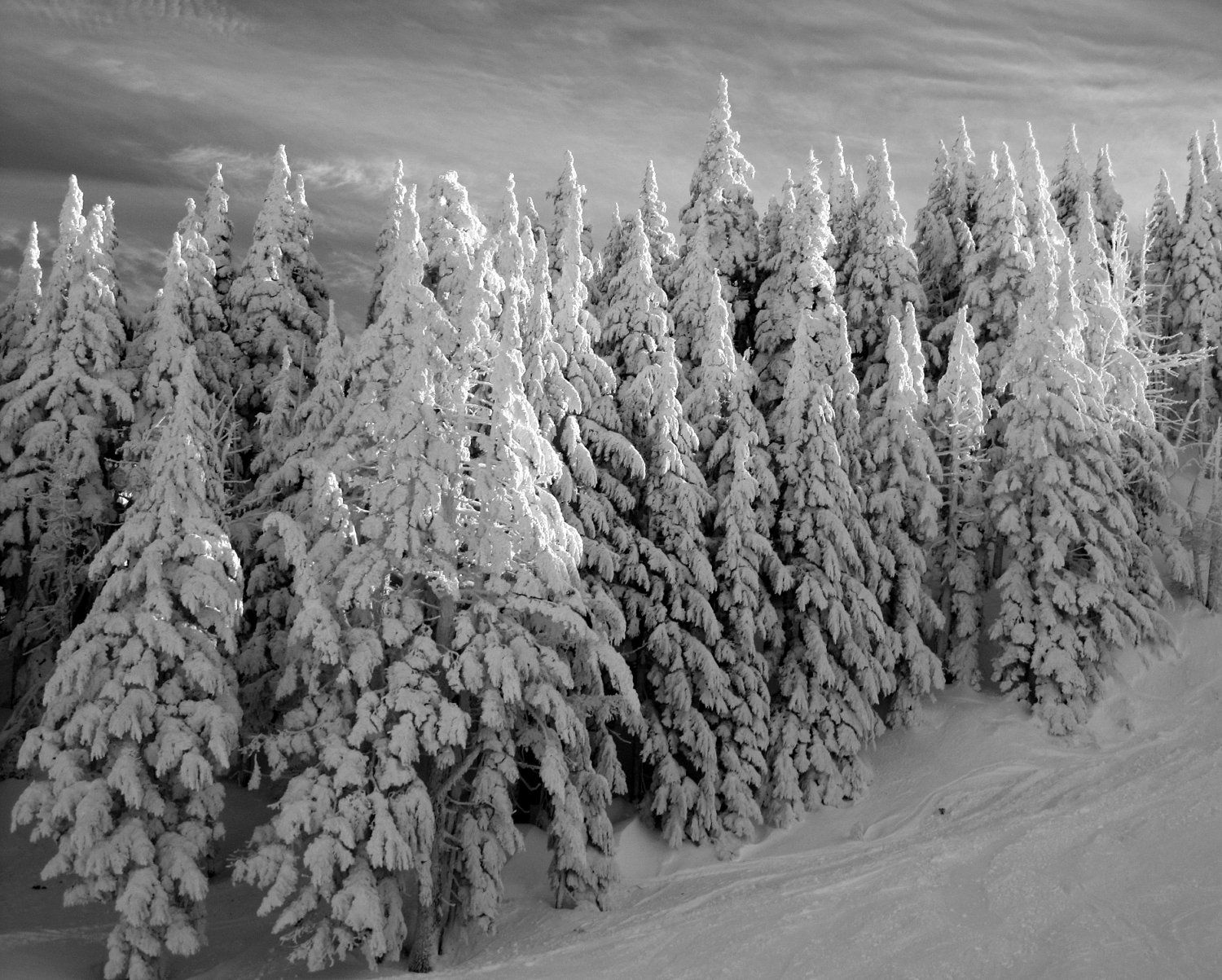 Snowy Forest Black And White
