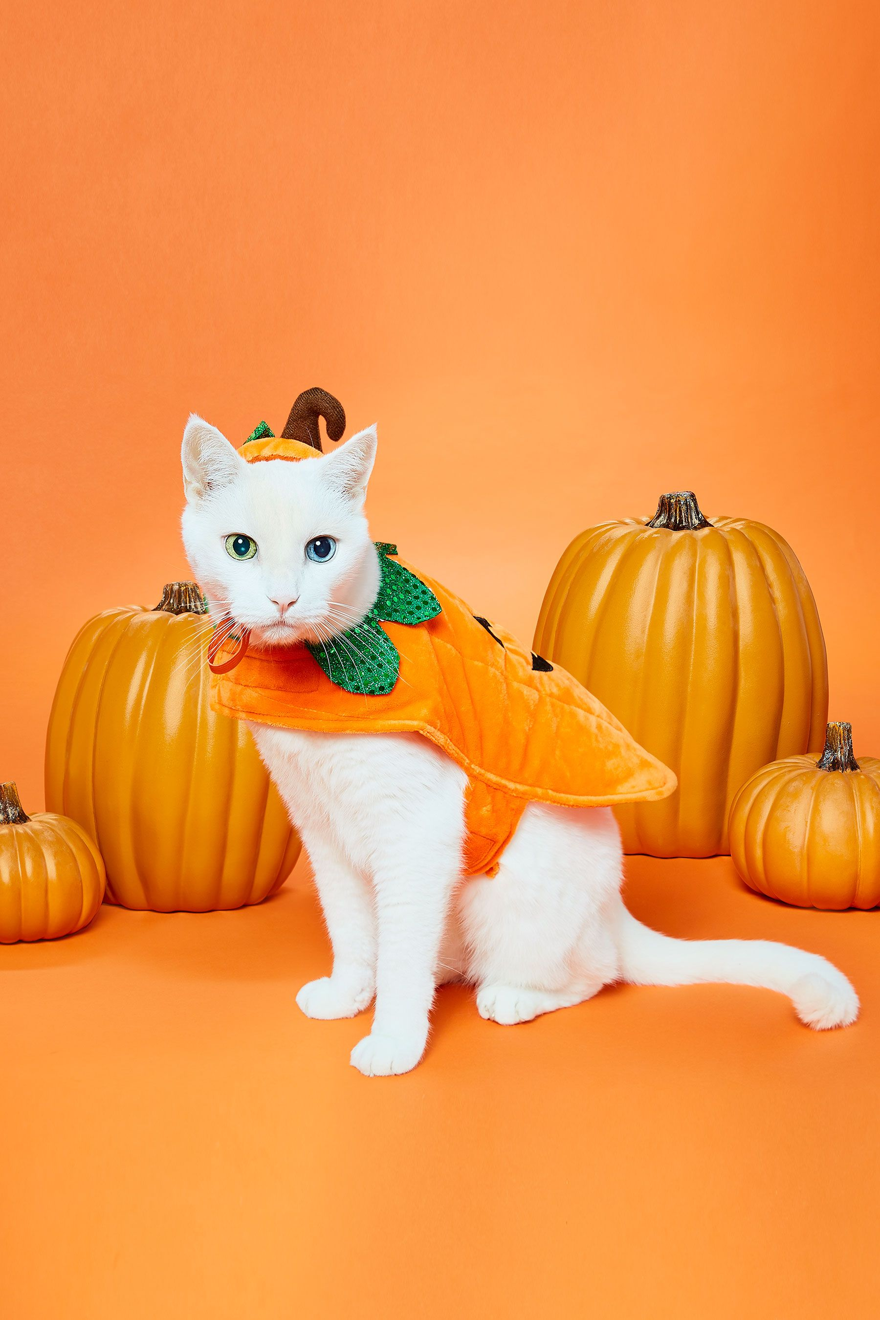 Fresh from the pawkin patch comes the Frisco Pumpkin Dog