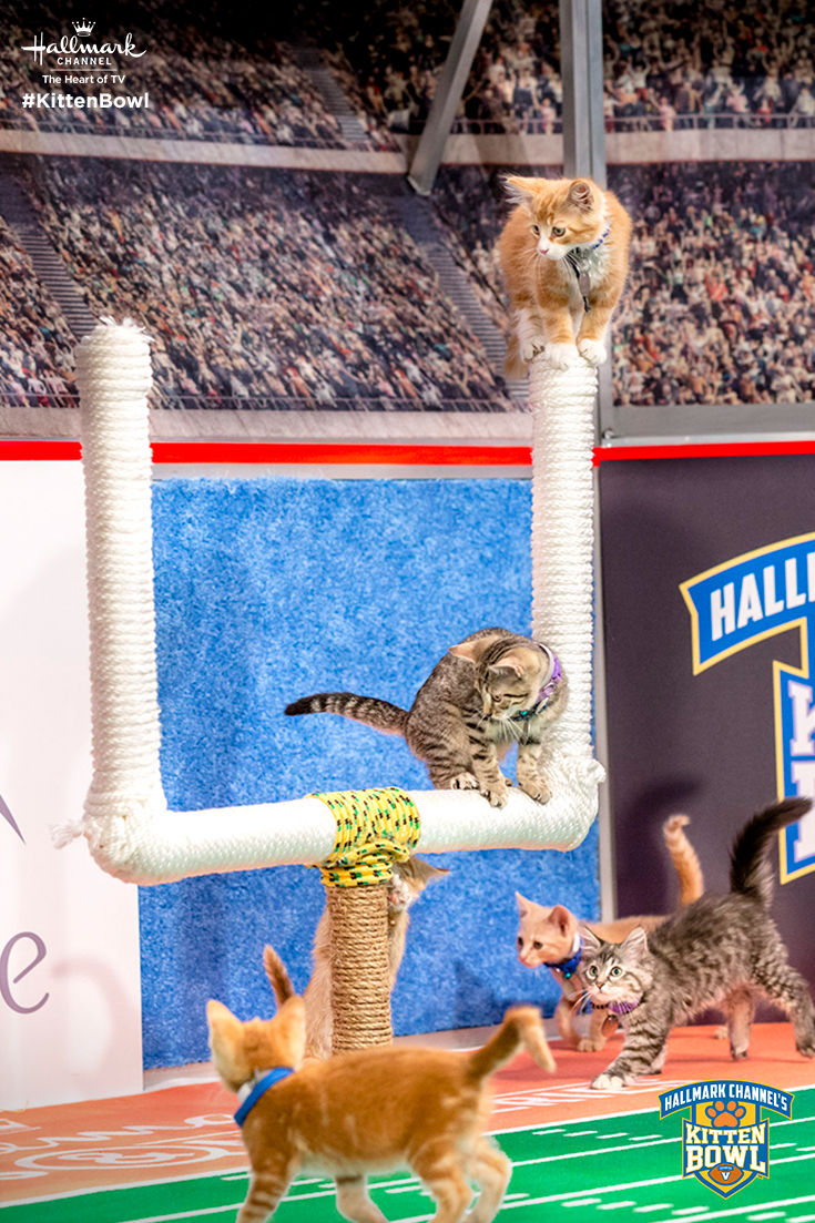 Kitten Bowl V Returns With New Cat Letes Taking The Field And The Goal Post On February 4 At 12 11c Kittenbowl Hallmar Kitten Bowls Kitten Kittens Cutest