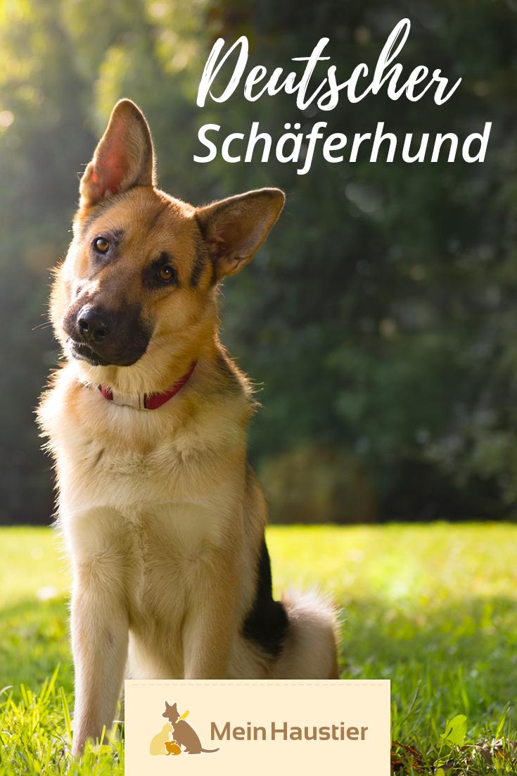 Deutscher Schaferhund Steckbrief Hunderassen Hunde Rassen
