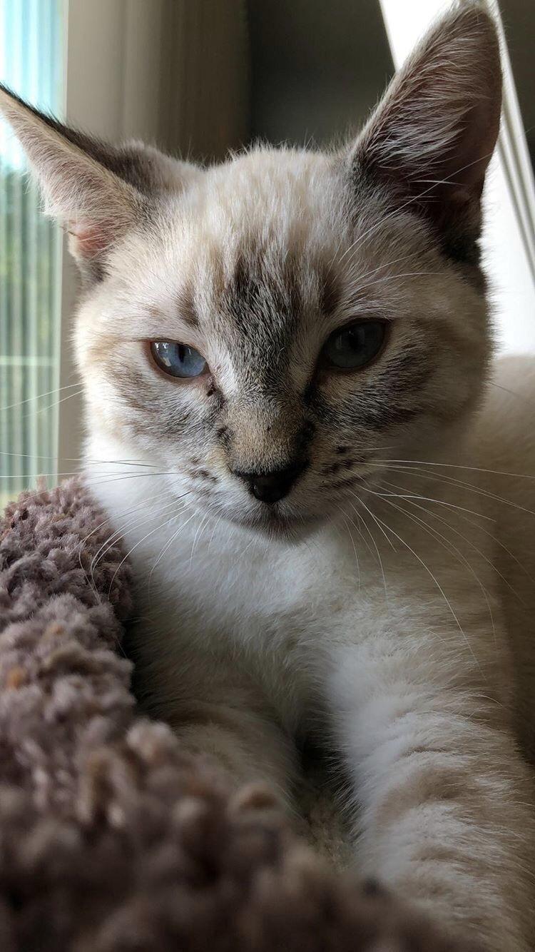 Your Ultimate Kitten Development Guide Pretty cats