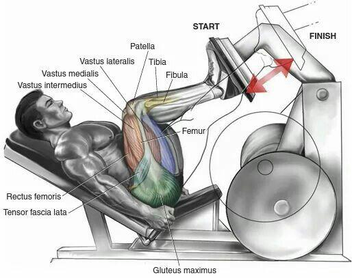 Pin De Luis Joga En Workout Con Imagenes Prensa Para Piernas